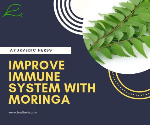 improve immune system with moringa | Buy Ayurvedic Herbs & Products Online | Certified by Ayurveda Doctors | 100% genuine | Trustherb Ayurvedic products marketplace