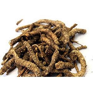 kutki-katuka-picrorhiza-kurroa