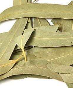 Neelagiri   Eucalyptus leaves
