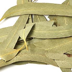 Neelagiri | Eucalyptus leaves