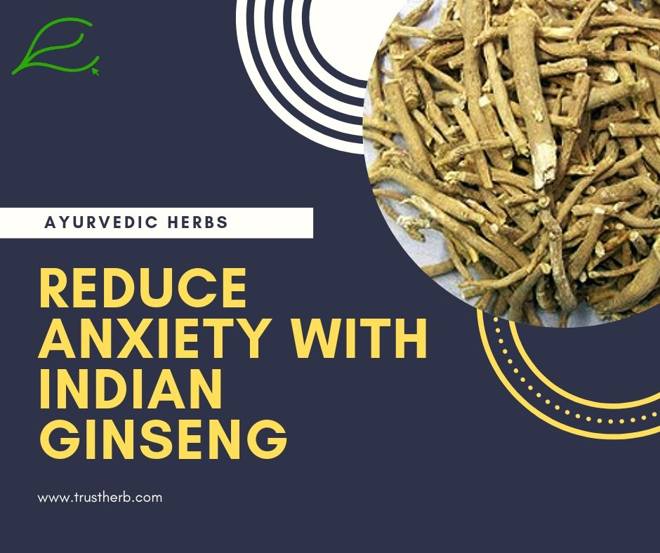 Indian Ginseng Ashwagandha