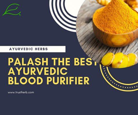 Palash- Blood purifier