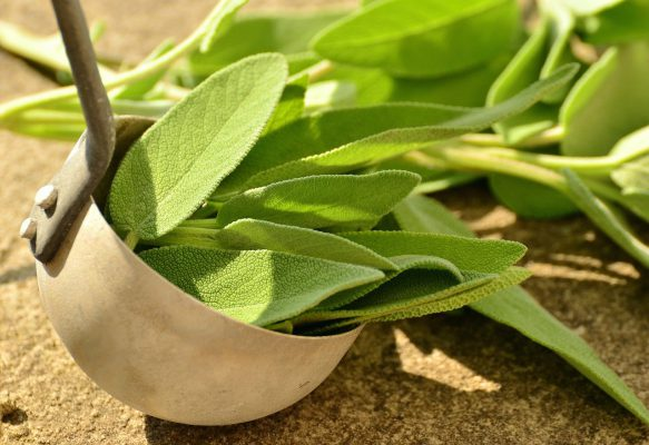 Health Benefits of Sage Leaves