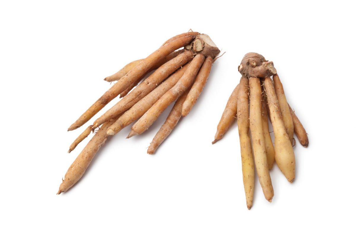Health Benefits of Kulanjan Galanga root